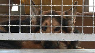 إقبال متزايد على الحيوانات الأليفة في ألمانيا