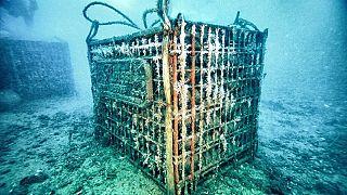Эксперты рассказали, почему виноделы выдерживают бутылки в морских погребах
