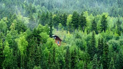 A secluded treehouse in Alaska