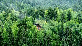 بيوت الأشجار في ألاسكا