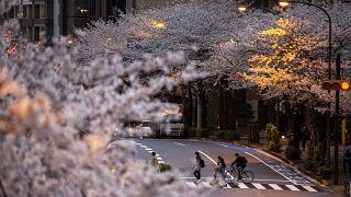 Цветущие сакуры в Токио