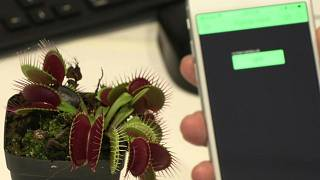 نباتات الروبوت