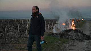 Γαλλία: Ο παγετός απειλεί τους αμπελώνες