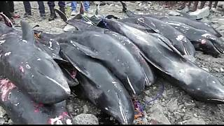 Dead Dolphins washed ashore in Ghana raise concerns