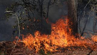 Illusztráció - fotó egy mexikói erdőtűzről