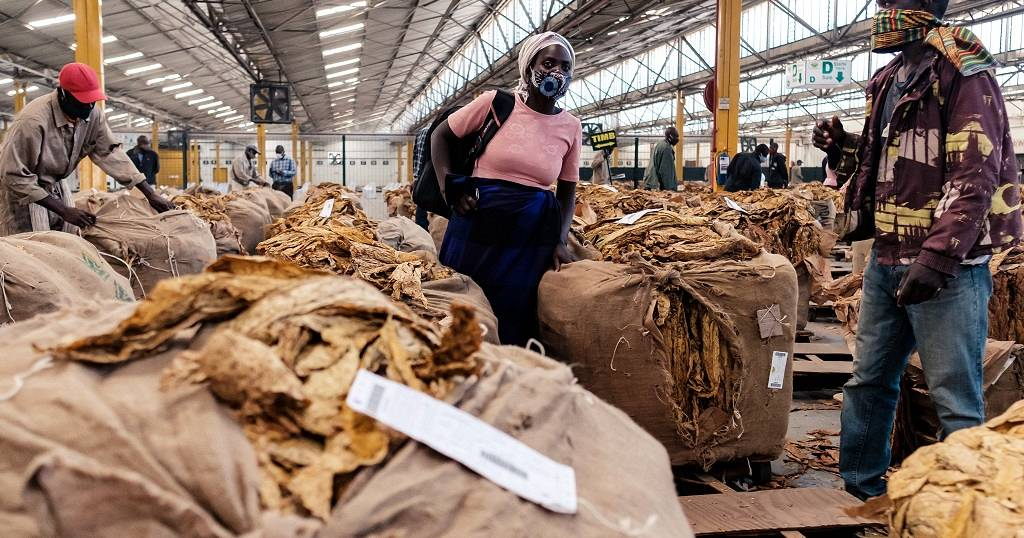Zimbabwe : des ventes de tabac sous de meilleurs auspices