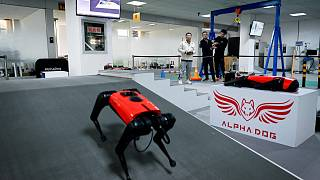 Chinese tech company develops robo dogs