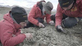 علماء في تشيلي يكتشفون ثدييات جديدة عاشت قبل 72 مليون سنة