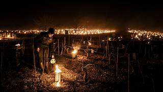 A winegrower from the Daniel-Etienne Defaix wine estate lights anti-frost candles in their vineyard near Chablis, Burgundy, France. April 7, 2021