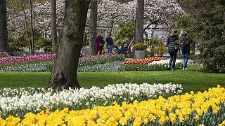 a few thousand people tiptoe through the 7 million tulips, hyacinths, daffodils in Keukenhof garden