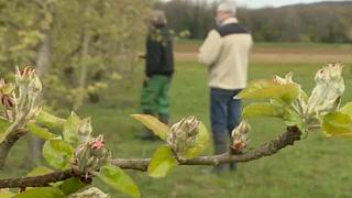 Plan de rescate a la agricultura en Francia ante las pérdidas por unas inusuales heladas