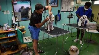 """صالون """"دون سيلفر"""" لتجميل الكلاب في هافانا"""