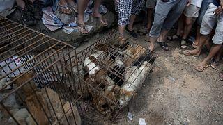 سوق بيع الكلاب في يولين بمقاطعة قوانغشي جنوب الصين في 21 يونيو 2015.