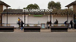Le zoo de Londres rouvre après une longue fermeture due au confinement