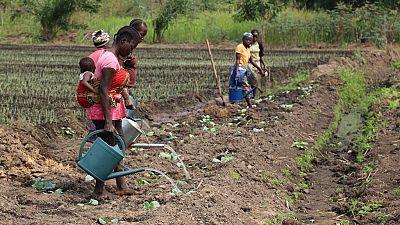 Congo : enfin la diversification économique ?