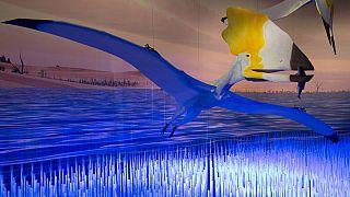 """صورة من الارشيف - جزء من معرض  """"التيروصورات: الطيران في عصر الديناصورات"""" -  المتحف الأمريكي للتاريخ الطبيعي في نيويورك"""
