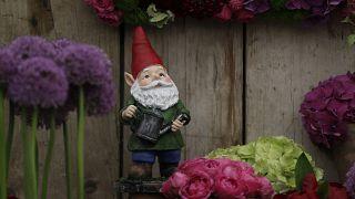 کوتولههای باغ که طرفداران بسیاری در بریتانیا دارد