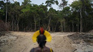 amazóniai törzsfőnök egy favágók által kiirtott terület előtt