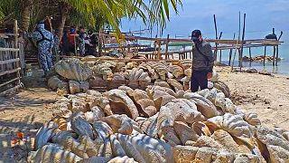 """مصادرة """"أصداف"""" عملاقة بـ25 مليون دولار في الفلبين"""