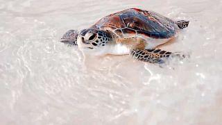 Meeresschutz in Dubai: von Haien bis zu Meeresschildkröten