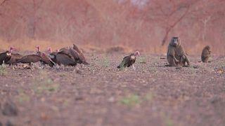 محمية طبيعية - السودان