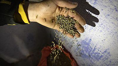 Maroc : les cultivateurs de cannabis veulent vivre sans peur