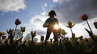 В Арезе снова открылся сад тюльпанов