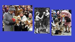 II. Erzsébet gyerekkora óta szereti a kutyákat