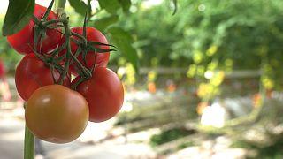 Obst und Gemüse nachhaltig auf den Tisch