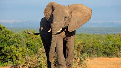 AI is helping save elephants from extinction
