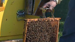 Le api a Milano
