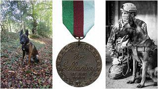 كلب القوات الخاصة الفرنسية الحاصل على أعلى ميدالية شجاعة في المملكة المتحدة