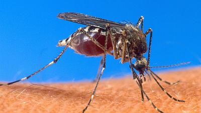 Malaria vaccine trial raises hope of beating the deadly disease