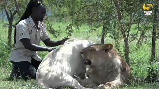 Holly Oliver Akello, une vie dédiée aux animaux