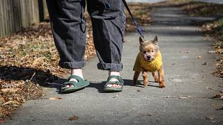 Kursten Hedgis walks her dog Bitsy in front of her home Dec. 9, 2020, in Decatur, Ga.