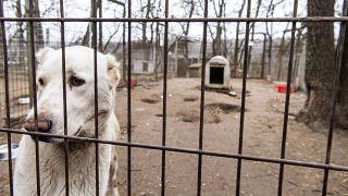 Kutya a budapesti NOÉ Állatotthonban 2021. február 7-én – képünk illusztráció