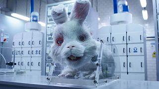 Tavşan Ralph animasyonundan