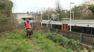 الحدائق تنمو على أطراف خط المترو في لندن