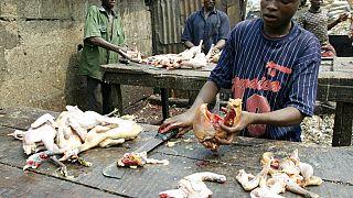 Des foyers de grippe aviaire détectés au Mali