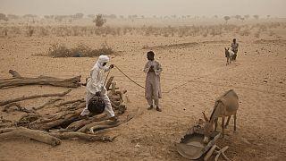 UN: 29 million in Sahel need humanitarian assistance