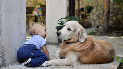 Children and pets increase yearly carbon emissions by up to 58 tonnes
