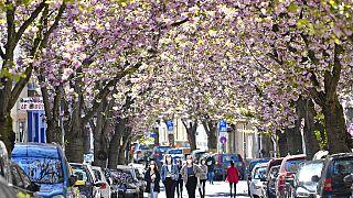 Blühende Bäume in Bonn