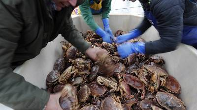 Fishermen arrange crabs after their boat returned from a fishing trip to the harbour in Hartlepool, England.
