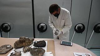 مستحاثات عمرها 15 مليون سنة وجدت مخبأة في صندوق سيارة في كرواتيا
