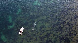 صغر حوت ضل طريقه وعبر من مياه الأطلسي إلى البحر المتوسط