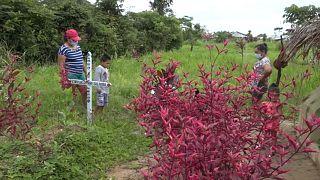 """Ein """"wilder"""" Friedhof im peruanischen Amazonasgebiet"""
