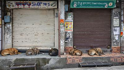 Street dogs sleep at a market as shops remain closed due to the COVID-19 pandemic in Dharmsala, India