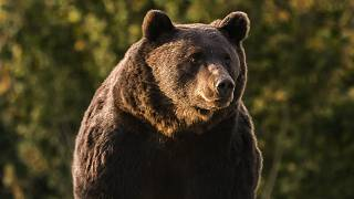 Polémica en Rumanía tras la caza de un oso emblemático a manos del príncipe Emanuel de Liechtenstein