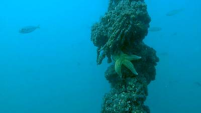 Receivers have been deployed across the seabed to track fish movement