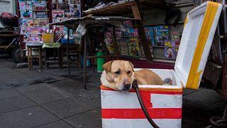 كلب يرقد في صندوق بجوار كشك لبيع الصحف في شنغهاي، 5 مارس 2017